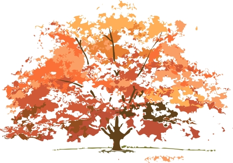 Fall-Colors-Maple-tree